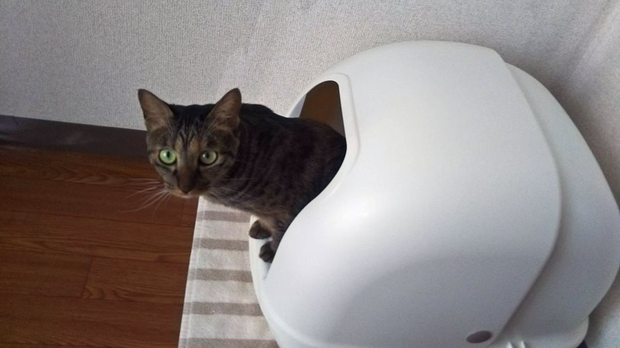 猫のトイレを準備!臭わない飛び散らないトイレ本体の選び方