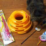子猫のおもちゃを準備!猫じゃらしは人気のじゃれ猫あそびで決まり