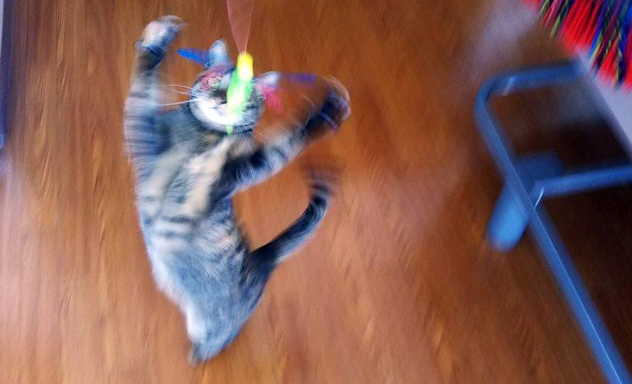 釣竿タイプ猫じゃらし