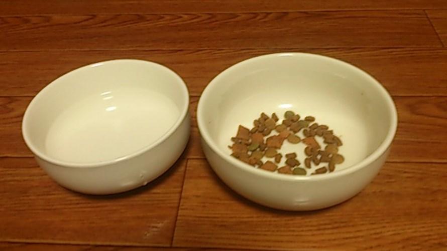 100均で選んだ猫用食器