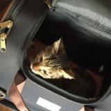 猫用キャリーバッグの種類に迷ったらリュック型がおすすめ