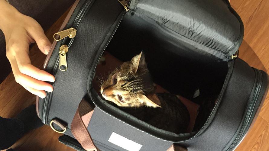 キャリーバッグと子猫