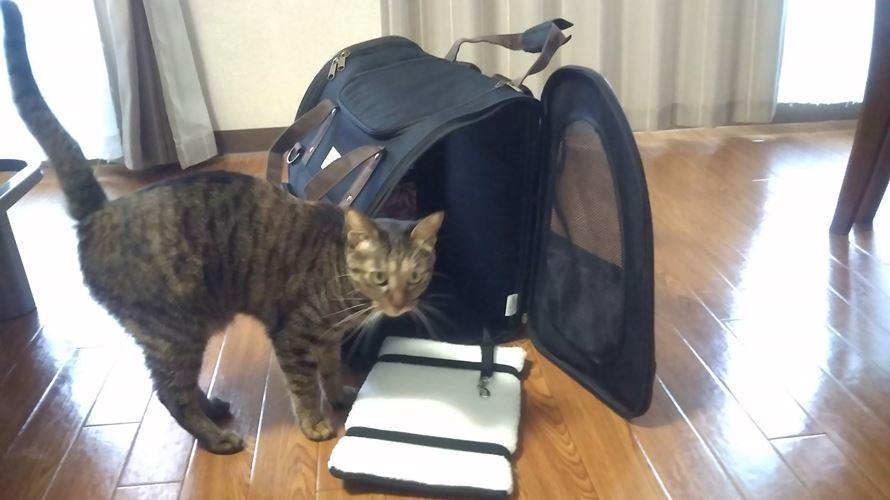 猫用リュック型キャリーバッグ
