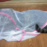 猫用キャリーバッグが急遽必要に!代用できるものは?
