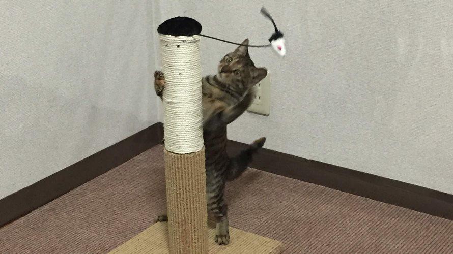 爪とぎと子猫