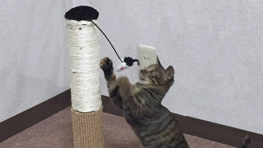 爪とぎのおもちゃで遊ぶ子猫