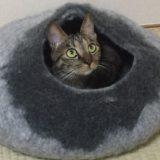 【猫ベッドの心得】愛猫が入らない使わないそんな時は…