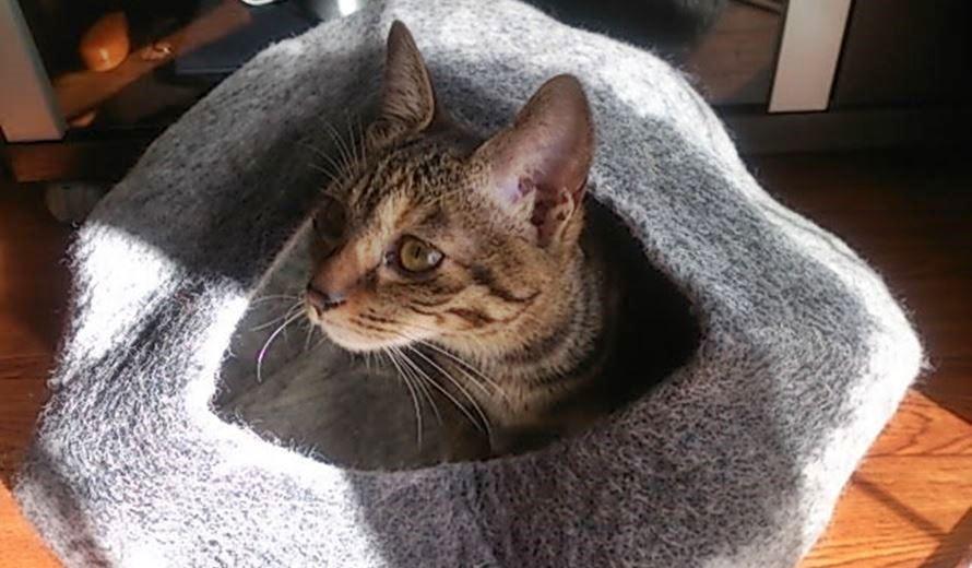 ドーム型猫ベッド