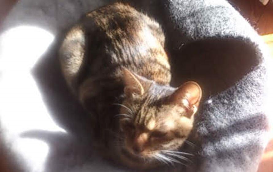 猫ベッドの上に乗る猫