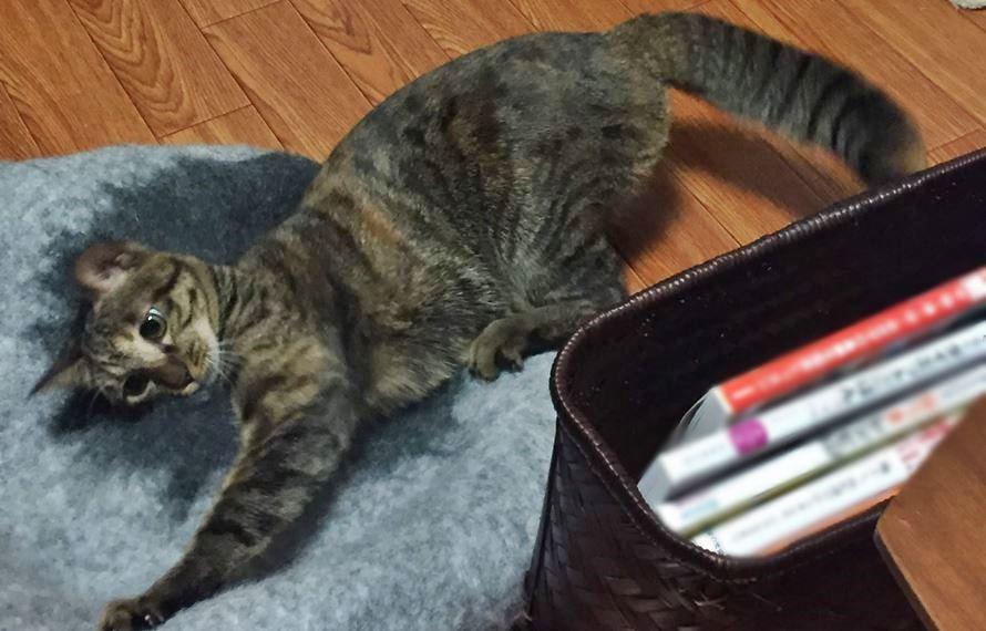 猫ベッドに手を入れる猫