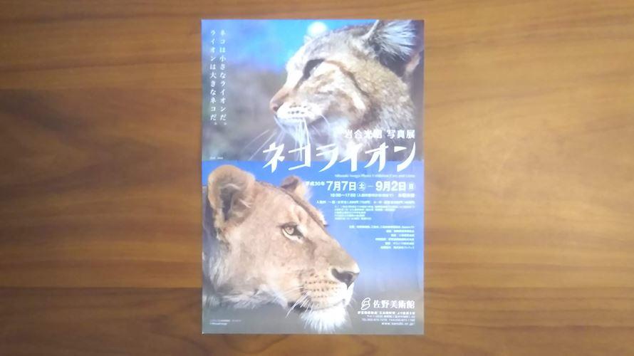 ネコライオン写真展チラシ