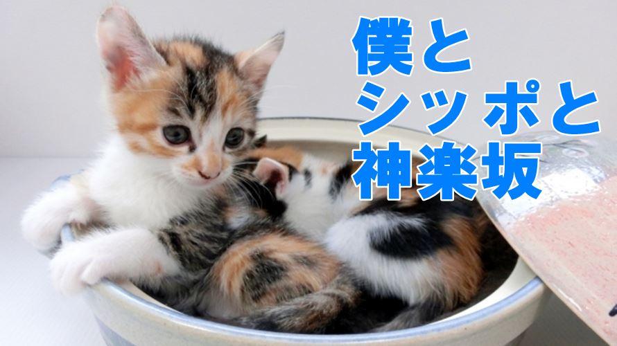 嵐の相葉くんは三毛猫と縁がある!?ドラマ「僕とシッポと神楽坂」