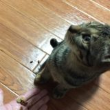 簡単!子猫・成猫に必要な餌の量とカロリーを計算する方法