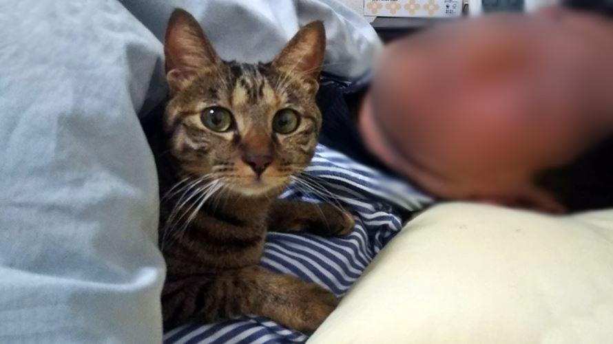 腕枕するキジトラ猫
