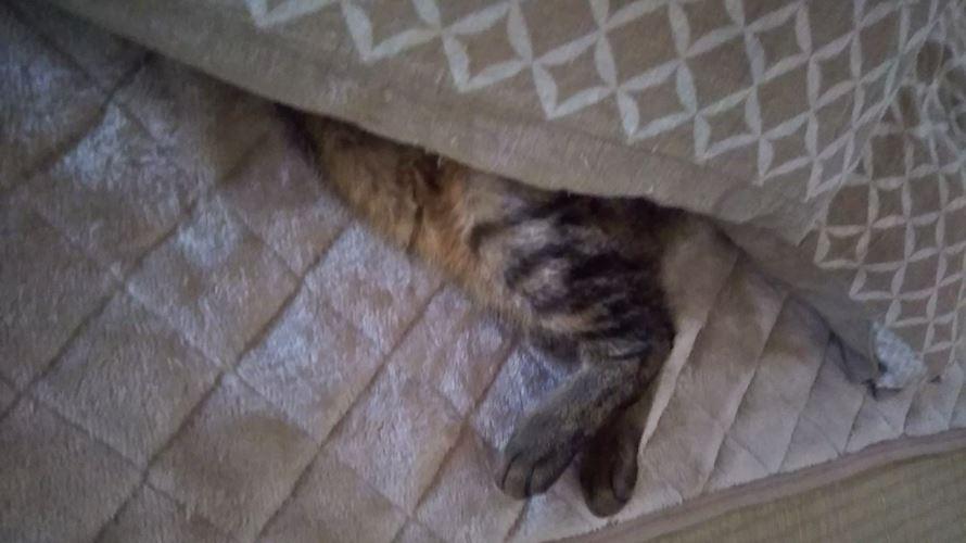 こたつと猫の足