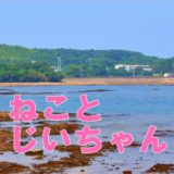 映画「ねことじいちゃん」タマ役にベーコン抜擢の理由がすごい!