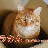 映画「トラさん」猫役はキスマイ北山宏光・金時のダブルキャスト