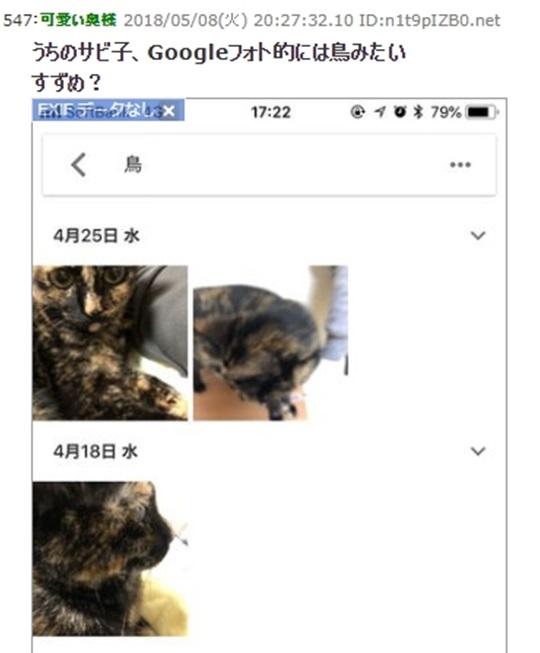 猫が鳥と認識された