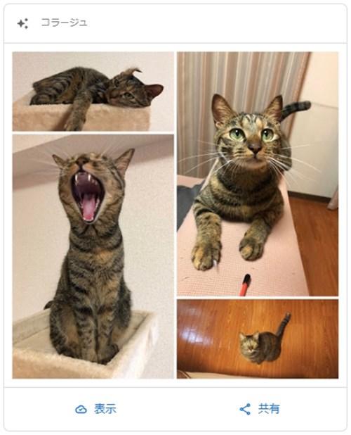 愛猫ミコのコラージュ