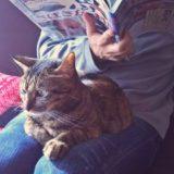 猫カレンダー2019が付録でついてくる猫専門雑誌を2冊ご紹介♪