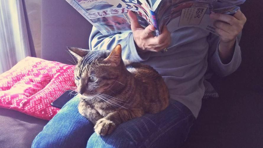 猫カレンダー2020が付録の雑誌まとめ!岩合さんのも!
