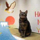お正月の猫♪かぶりもの・ちゃんちゃんこ・着物姿の写真&フォトコンテスト情報