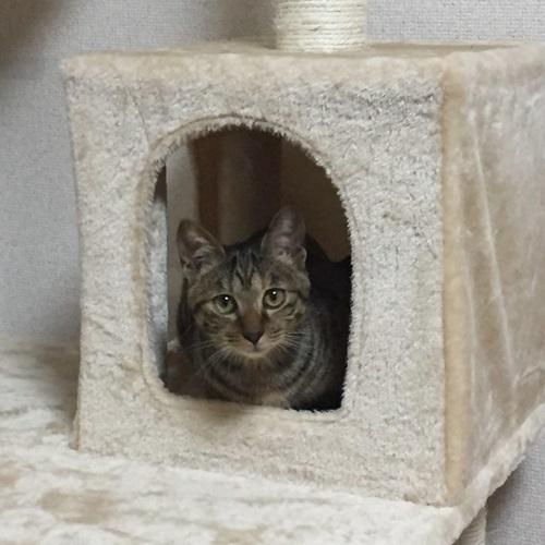 子猫とキャットタワー