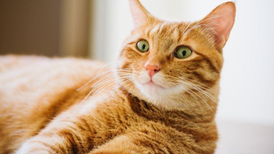 キスマイ北山くん初主演映画「トラさん」茶トラ猫の名前は?種類は?