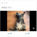 Googleフォト愛猫を犬と勘違い!猫なのにスケートボード?おもしろ誤認識