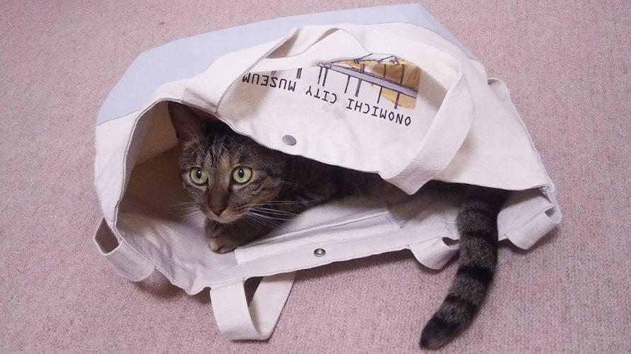 尾道市立美術館の猫トートバッグ歴代絵柄を振返り。第4弾2019年7月6日発売