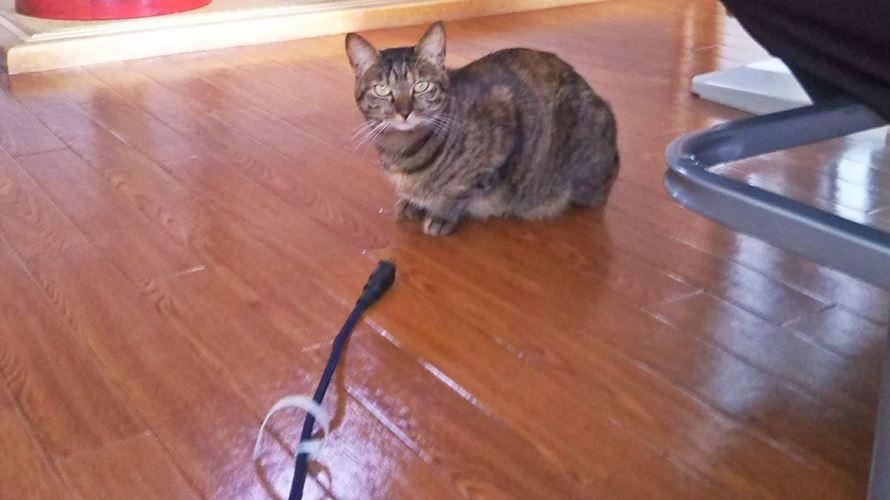 電源コードと猫