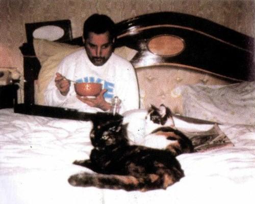 フレディの飼い猫ミコとデライラ