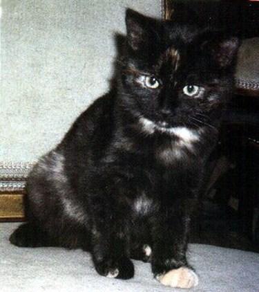 フレディ・マーキュリーの飼い猫ミコ
