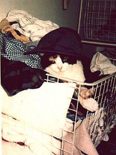 フレディ・マーキュリーの飼い猫デライラ