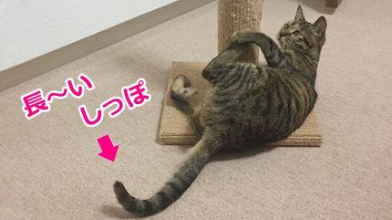 猫ミコの長いしっぽ