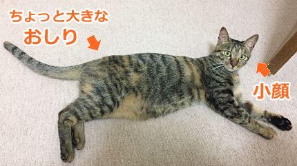 猫ミコ小顔