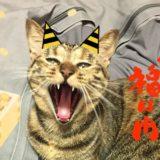 猫と節分の豆まきを安全に楽しもう!鬼のかぶりものや桃太郎姿の猫も紹介