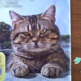 子猫の時からタレント猫!ベーコンのデビュー作・出演作品を紹介