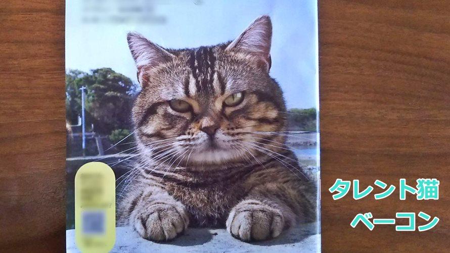 タレント猫ベーコン