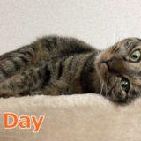 なぜ2月22日は猫の日?由来やアメリカなど外国の猫の日も紹介