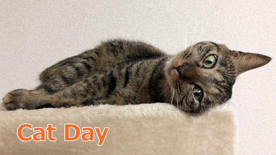 なぜ2月22日は猫の日?由来やアメリカなど海外の猫の日も紹介