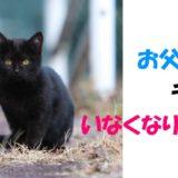 映画「初恋 お父さん、チビがいなくなりました」黒猫の名前は?出演作も紹介