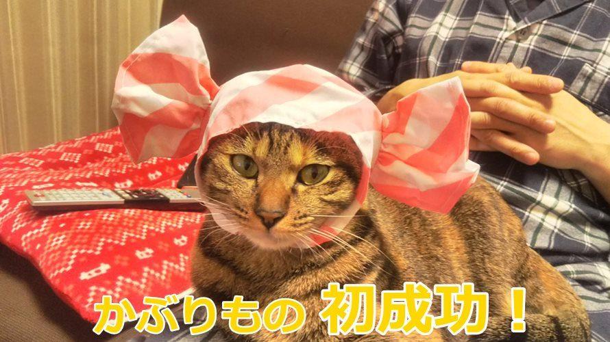 猫のかぶりもの初挑戦!嫌がる猫に被せるコツと注意点