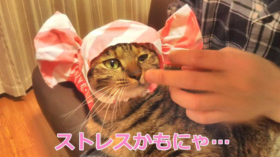猫のかぶりものストレス