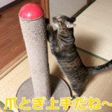 猫の爪とぎのしつけどうしたら上手くいく?成功者に学ぶコツ
