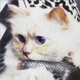 カール・ラガーフェルドの遺産を相続?モデル猫シュペットとは
