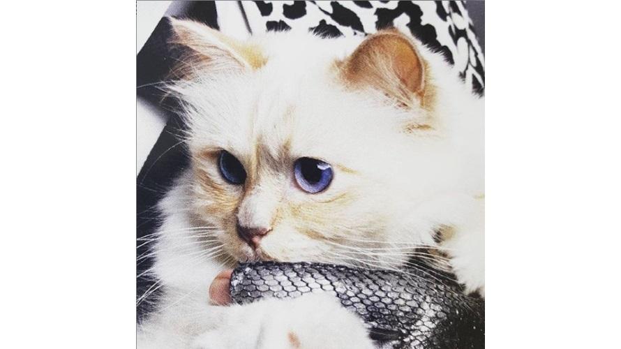 シュペット猫