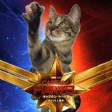 あなたもグース通に!映画「キャプテン・マーベル」猫のグース裏話