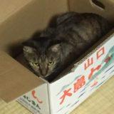 ホゴネコの日は知ってる?5月25日の由来。世界の保護猫の日はいつ?