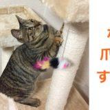 猫の爪とぎ意味・理由知ってる?困った爪とぎ解決のヒント